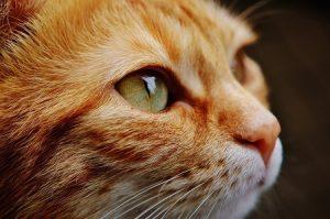 Contacter Miaoubox pour faire plaisir tous les mois à votre chat